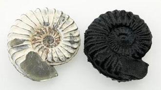 l'impression 3D et le scan 3D pour les musées et l'archéologie