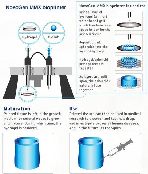 3D bioprinting technology infographic. Image credit: Broadsheet.ie.
